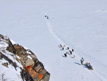 狗拉雪橇比赛02