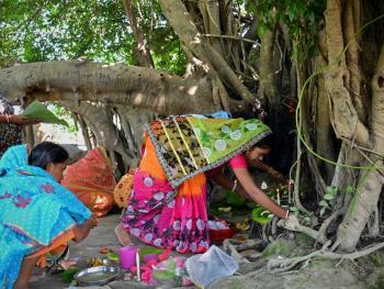 孟加拉妇女的榕树崇拜13