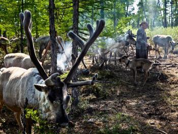 使鹿部落11
