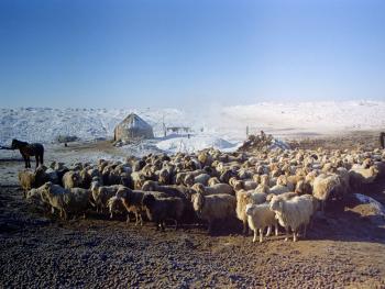 哈萨克族牧民的转场06