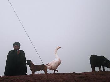 彝人与家畜