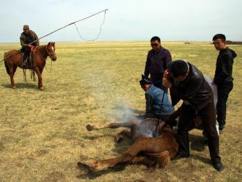 蒙古族春季打马印11