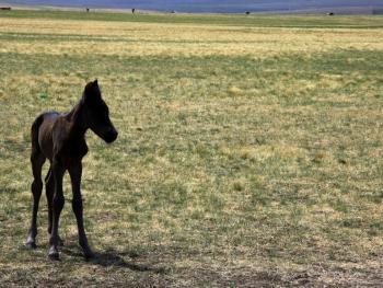 蒙古族春季打马印13