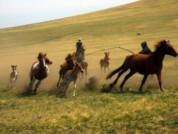 蒙古族春季打马印05