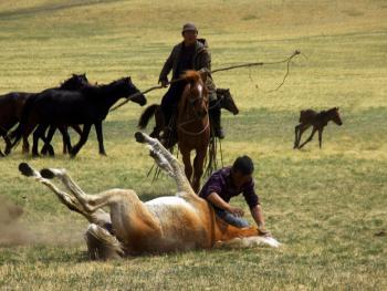 蒙古族春季打马印08