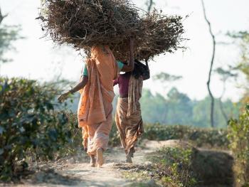 头顶上的孟加拉11