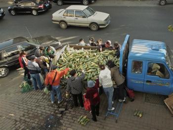秋菜上市的日子08