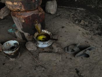 榨芥子油的传统工艺05