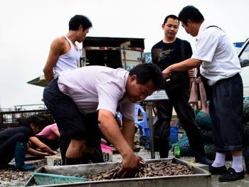 广州黄沙水产批发市场12