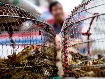 广州黄沙水产批发市场09