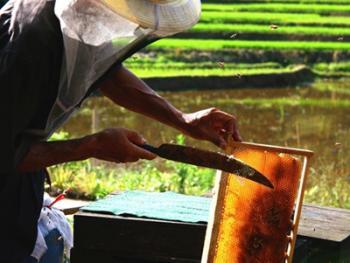 山村养蜂人10