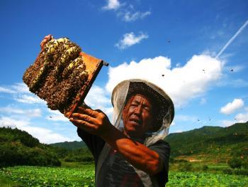 山村养蜂人05
