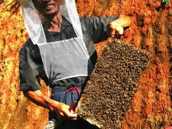 山村养蜂人06