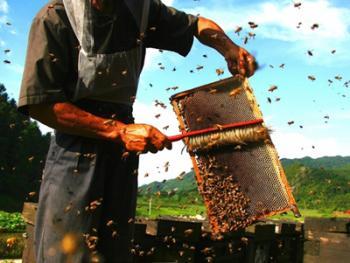 山村养蜂人09