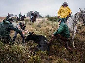 西班牙牧牛人12