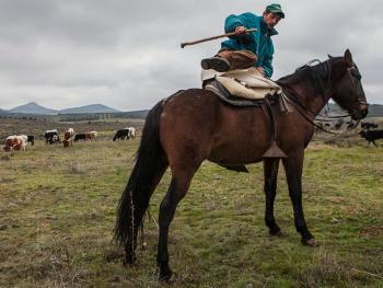 西班牙牧牛人02