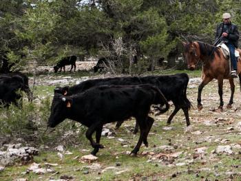 西班牙牧牛人06