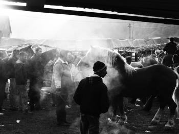 特兰西瓦尼亚牲畜集市10