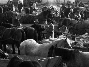 特兰西瓦尼亚牲畜集市02