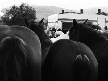 特兰西瓦尼亚牲畜集市03