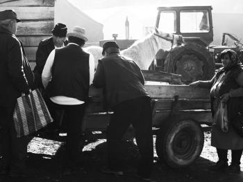 特兰西瓦尼亚牲畜集市05
