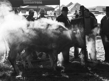 特兰西瓦尼亚牲畜集市08