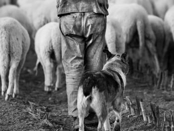 意大利北部的牧羊人14