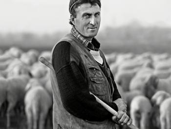 意大利北部的牧羊人07