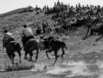 土库曼人和马11