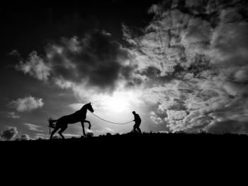 土库曼人和马