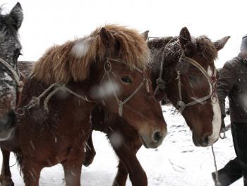 冬季里的马市10