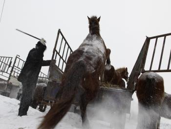 冬季里的马市06