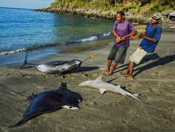拉玛莱拉传统捕鲸11