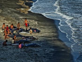 拉玛莱拉传统捕鲸12