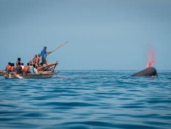 拉玛莱拉传统捕鲸07