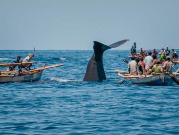 拉玛莱拉传统捕鲸