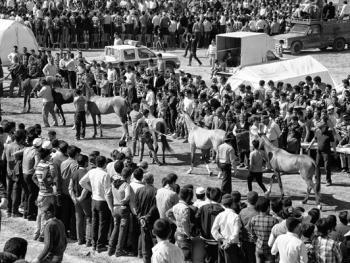 马与伊朗的土库曼人10