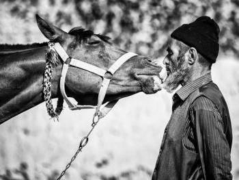 马与伊朗的土库曼人