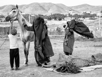 马与伊朗的土库曼人06