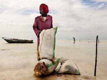 坦桑尼亚的海藻收获11