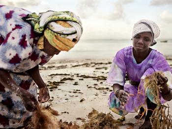 坦桑尼亚的海藻收获02
