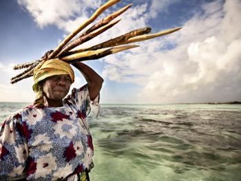 坦桑尼亚的海藻收获