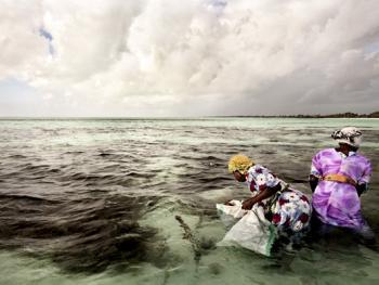 坦桑尼亚的海藻收获07