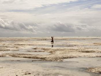 坦桑尼亚的海藻收获09
