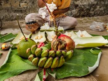 西孟加拉邦泥中抢椰子游戏01