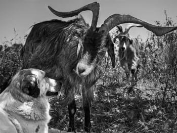 葡萄牙牧羊人的生活12