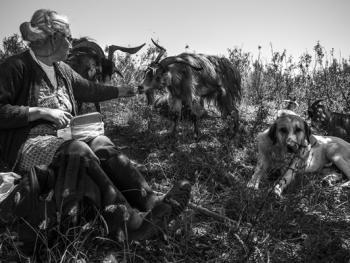 葡萄牙牧羊人的生活13