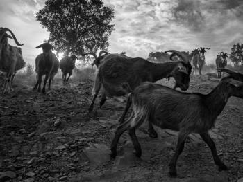 葡萄牙牧羊人的生活14
