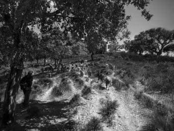 葡萄牙牧羊人的生活03