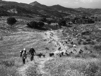 葡萄牙牧羊人的生活04